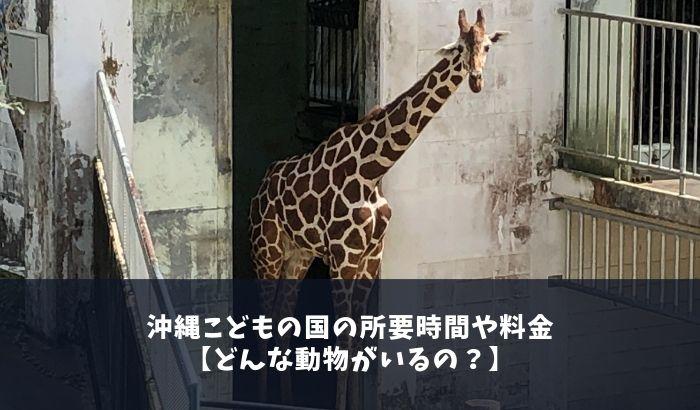 沖縄こどもの国の所要時間や料金【どんな動物がいるの?】